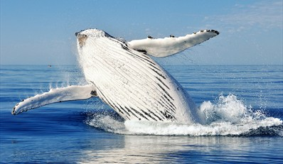 tzoo.g.local.55217.9260.cape-may-whale